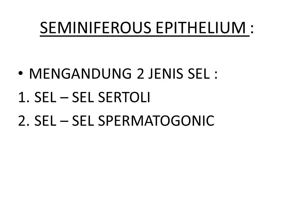 SEMINIFEROUS EPITHELIUM :