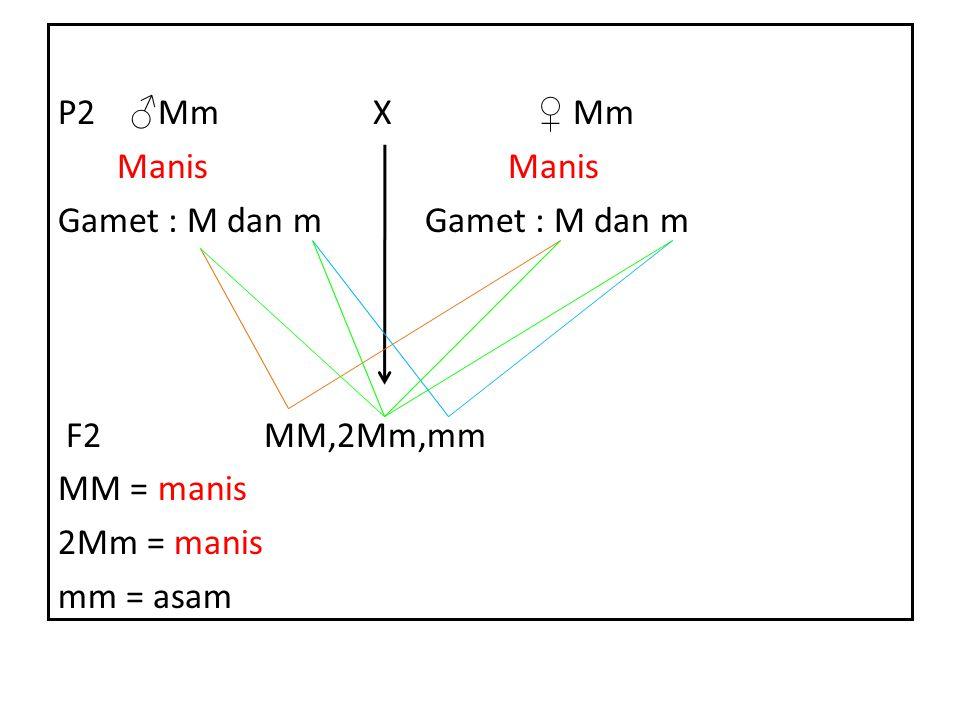 P2 ♂Mm X ♀ Mm Manis Manis Gamet : M dan m Gamet : M dan m F2 MM,2Mm,mm