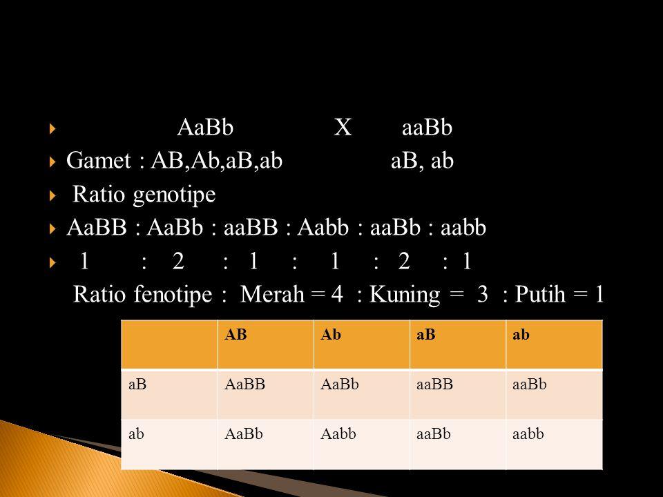 AaBB : AaBb : aaBB : Aabb : aaBb : aabb 1 : 2 : 1 : 1 : 2 : 1