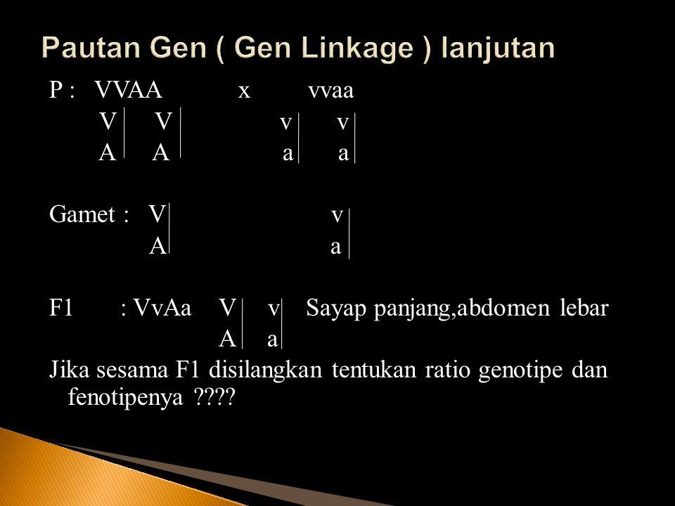 Pautan Gen ( Gen Linkage ) lanjutan