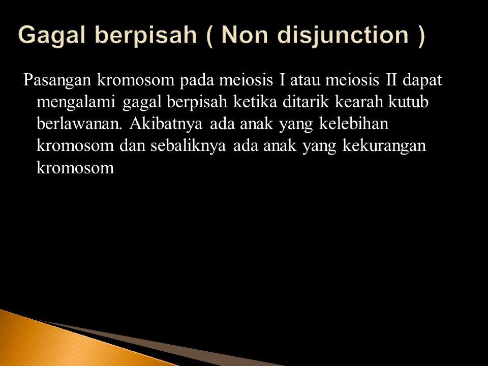 Gagal berpisah ( Non disjunction )