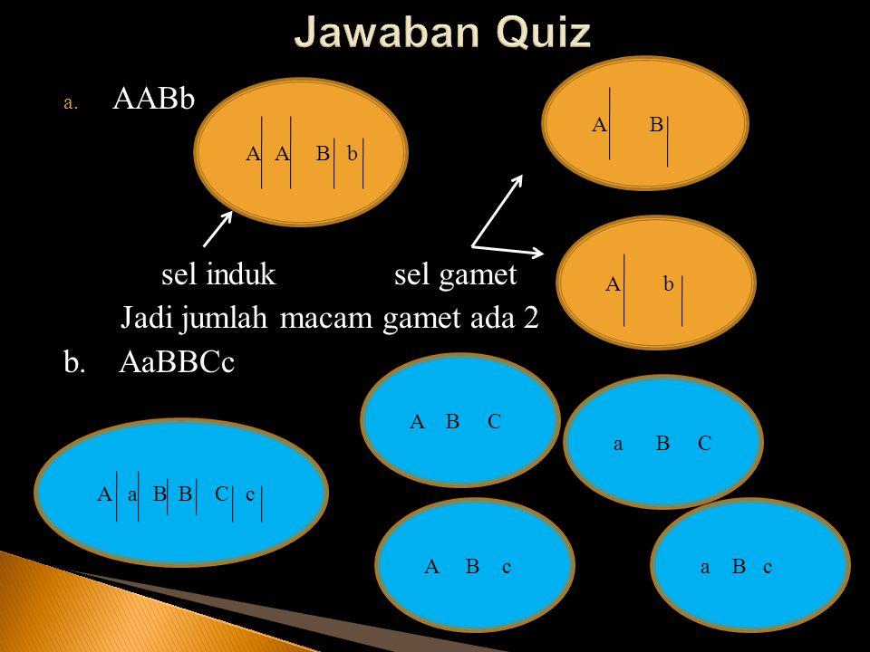 Jawaban Quiz AABb sel induk sel gamet Jadi jumlah macam gamet ada 2