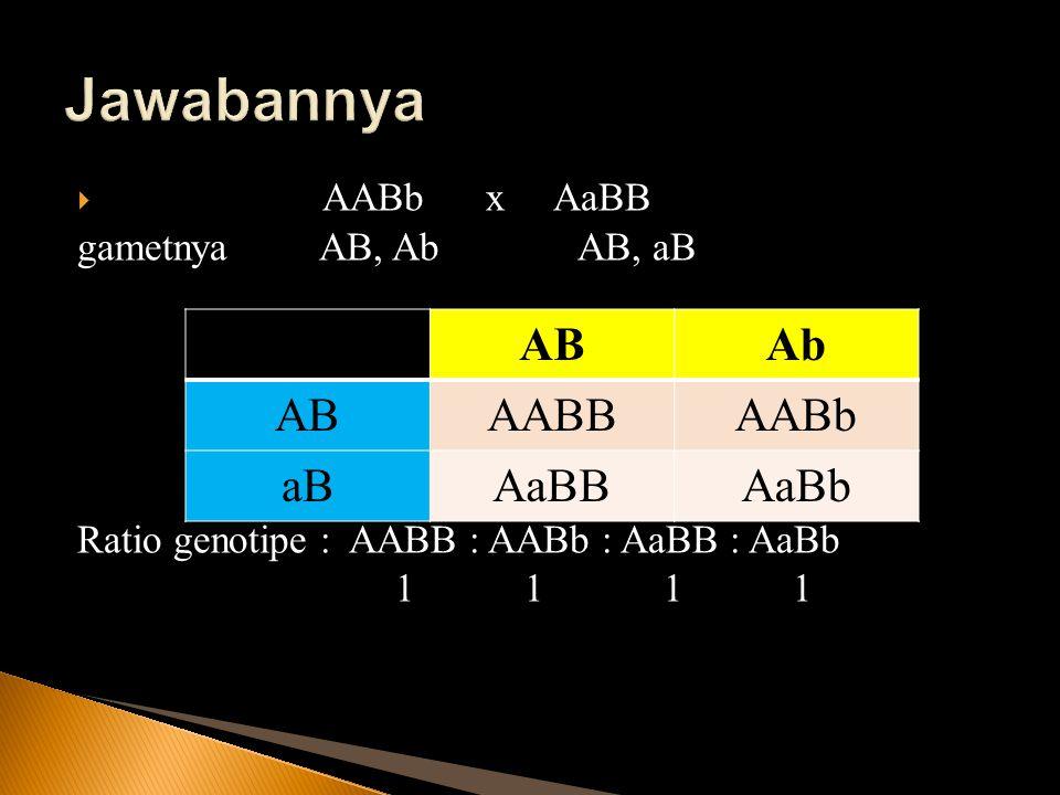 Jawabannya AB Ab AABB AABb aB AaBB AaBb AABb x AaBB