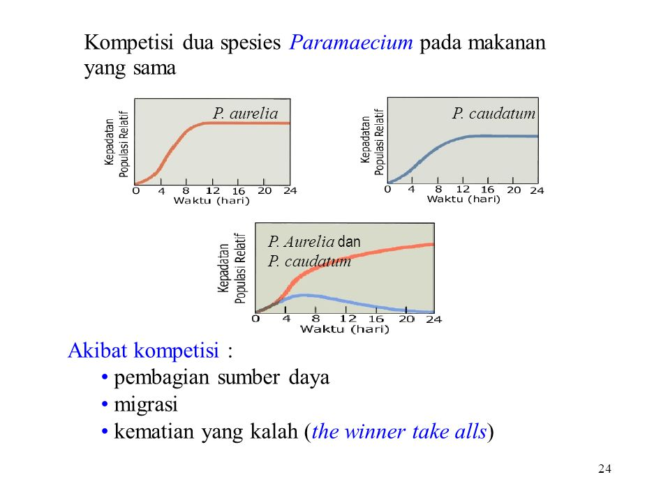Kompetisi dua spesies Paramaecium pada makanan yang sama