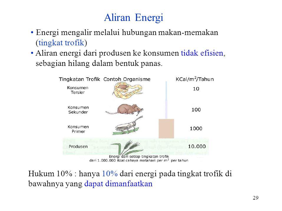 Aliran Energi • Energi mengalir melalui hubungan makan-memakan