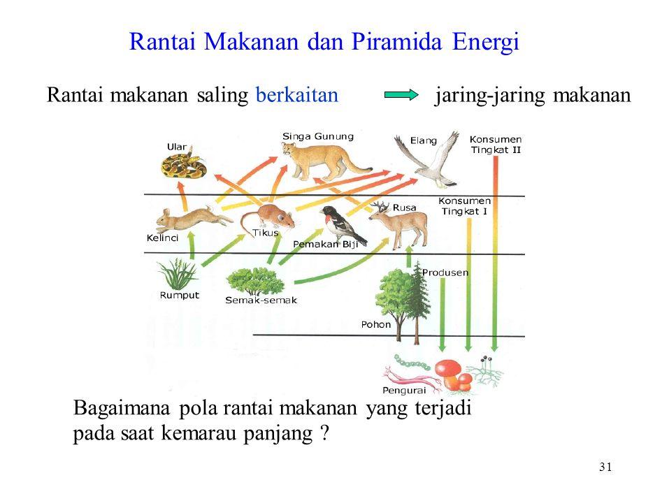 Rantai Makanan dan Piramida Energi