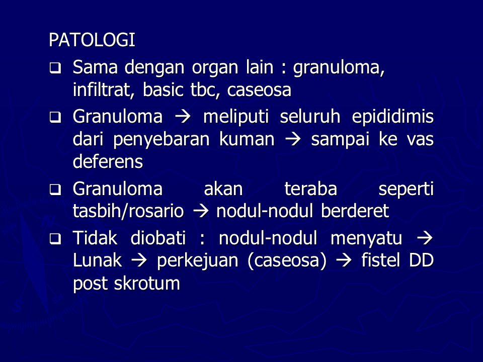PATOLOGI Sama dengan organ lain : granuloma, infiltrat, basic tbc, caseosa.