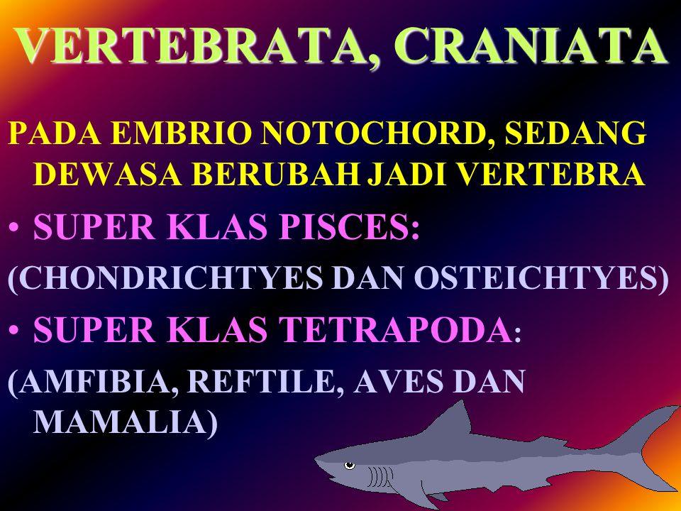 VERTEBRATA, CRANIATA SUPER KLAS PISCES: SUPER KLAS TETRAPODA:
