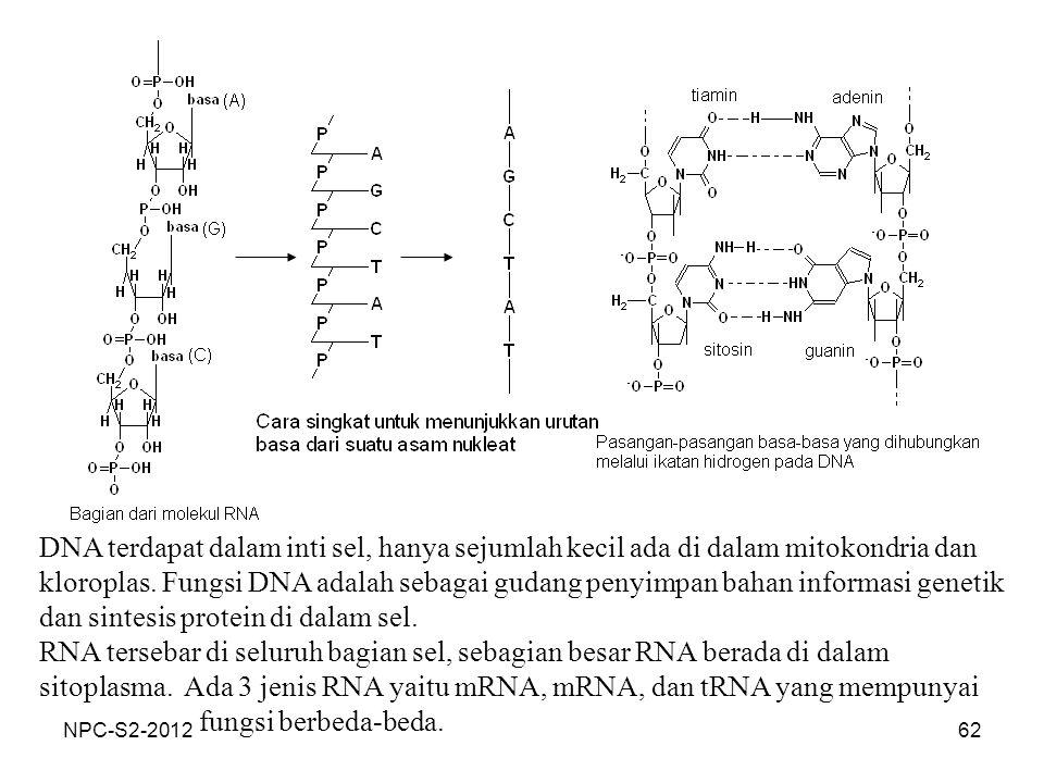DNA terdapat dalam inti sel, hanya sejumlah kecil ada di dalam mitokondria dan kloroplas. Fungsi DNA adalah sebagai gudang penyimpan bahan informasi genetik dan sintesis protein di dalam sel.