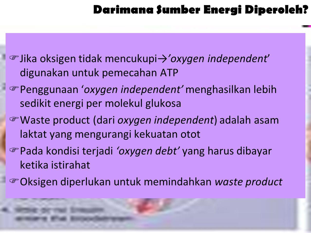 Darimana Sumber Energi Diperoleh