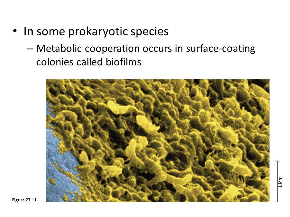 In some prokaryotic species