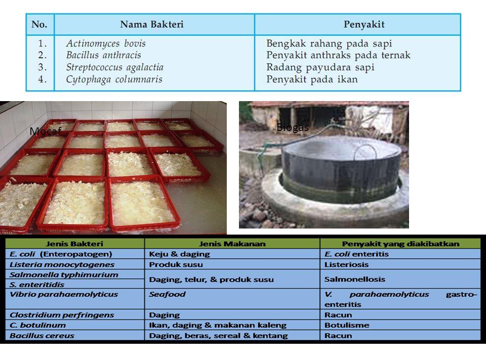 Biogas Mocaf