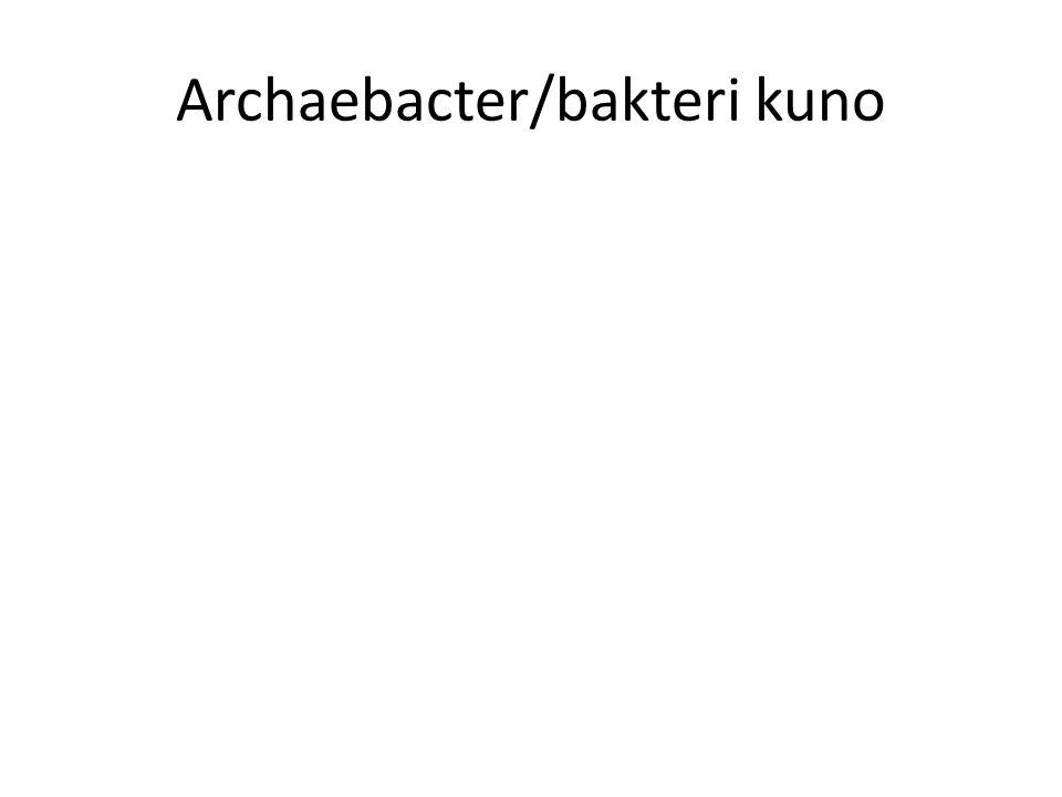 Archaebacter/bakteri kuno
