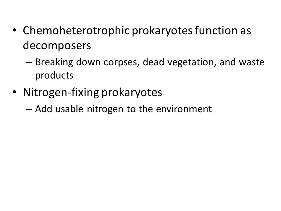 Chemoheterotrophic prokaryotes function as decomposers