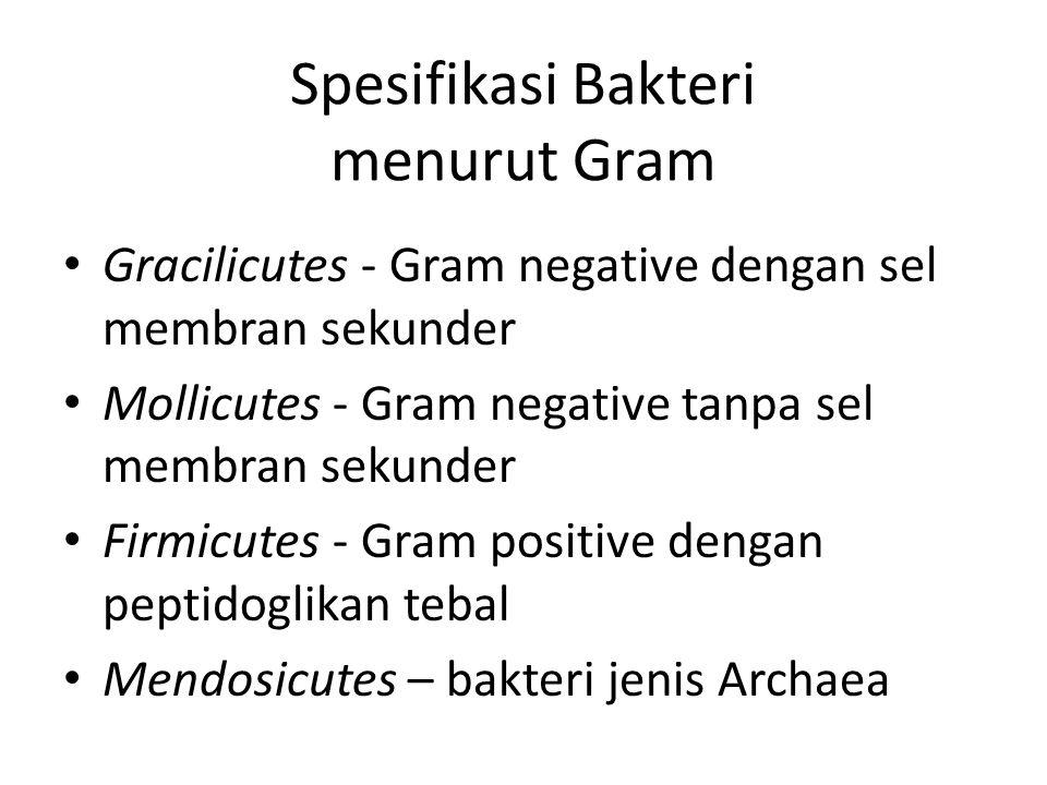 Spesifikasi Bakteri menurut Gram