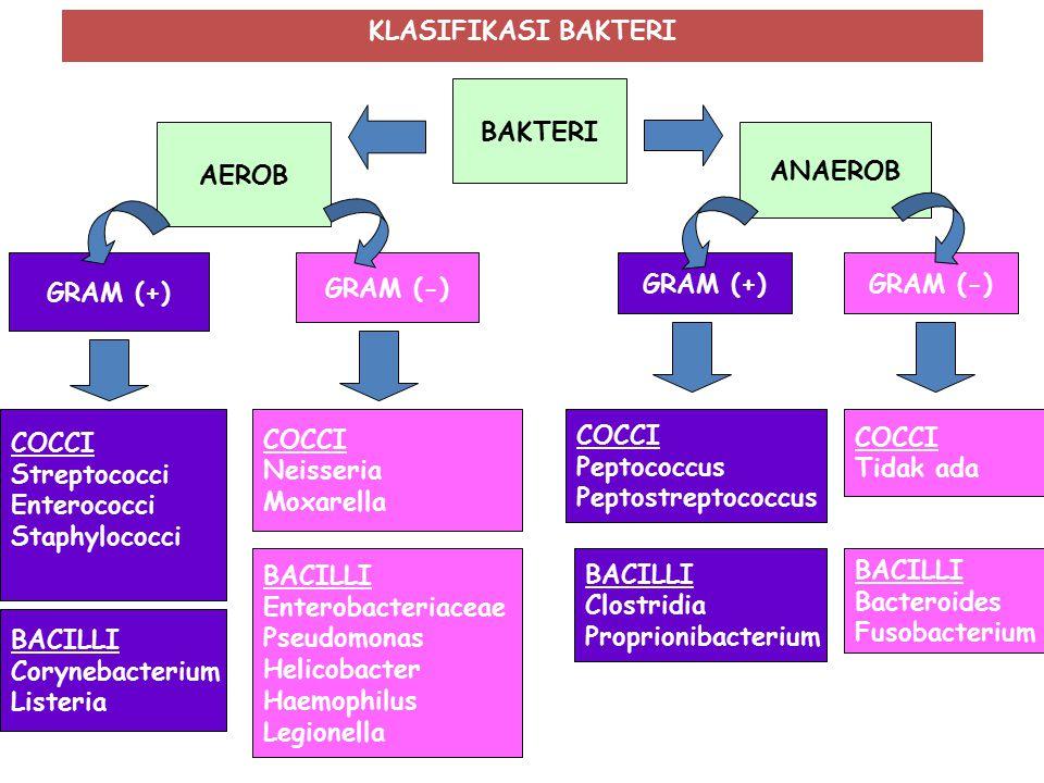 KLASIFIKASI BAKTERI BAKTERI. AEROB. ANAEROB. GRAM (+) GRAM (-) GRAM (+) GRAM (-) COCCI. Streptococci.