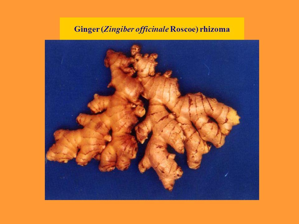 Ginger (Zingiber officinale Roscoe) rhizoma