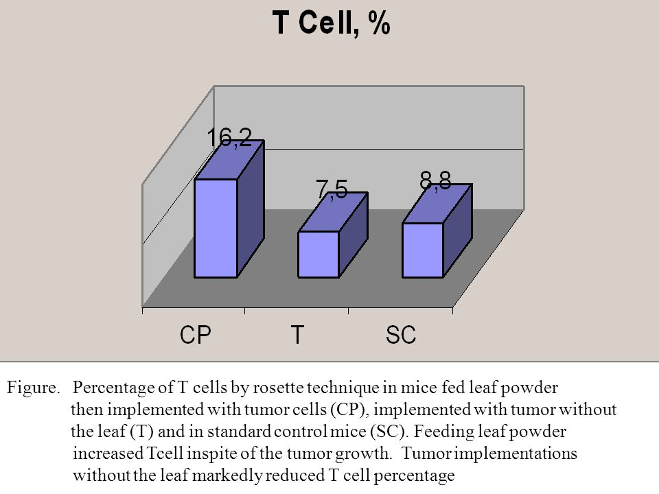 Figure. Percentage of T cells by rosette technique in mice fed leaf powder