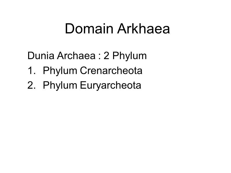 Dunia Archaea : 2 Phylum Phylum Crenarcheota Phylum Euryarcheota