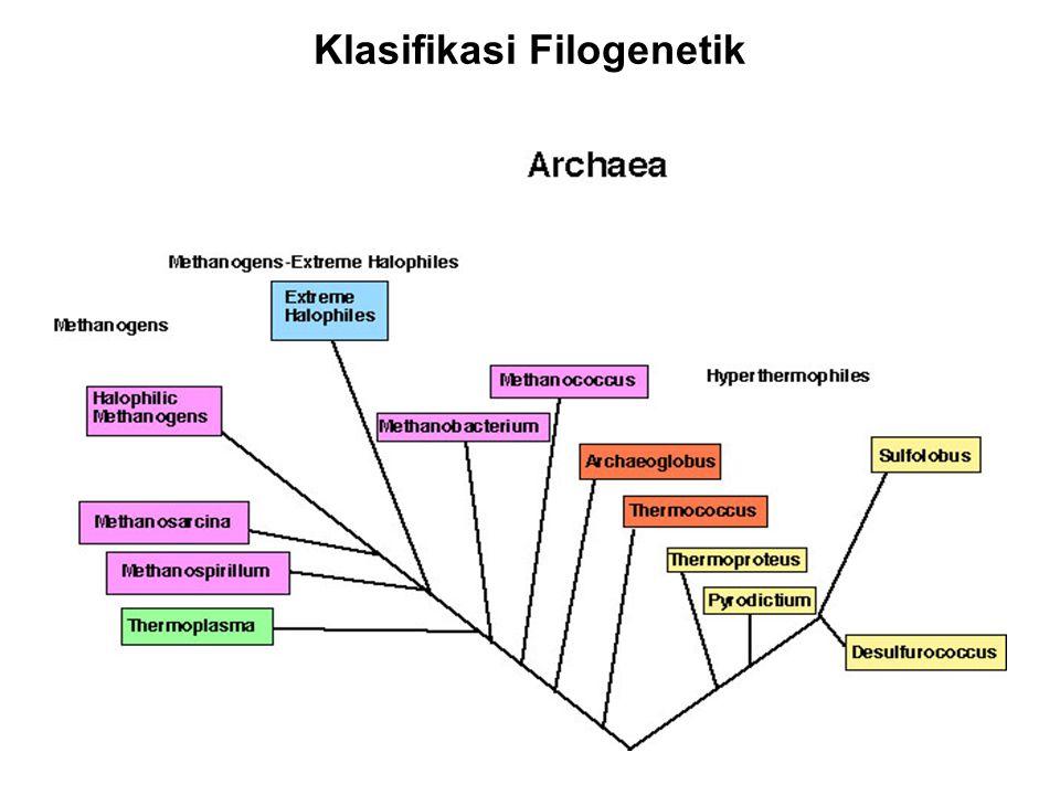 Klasifikasi Filogenetik