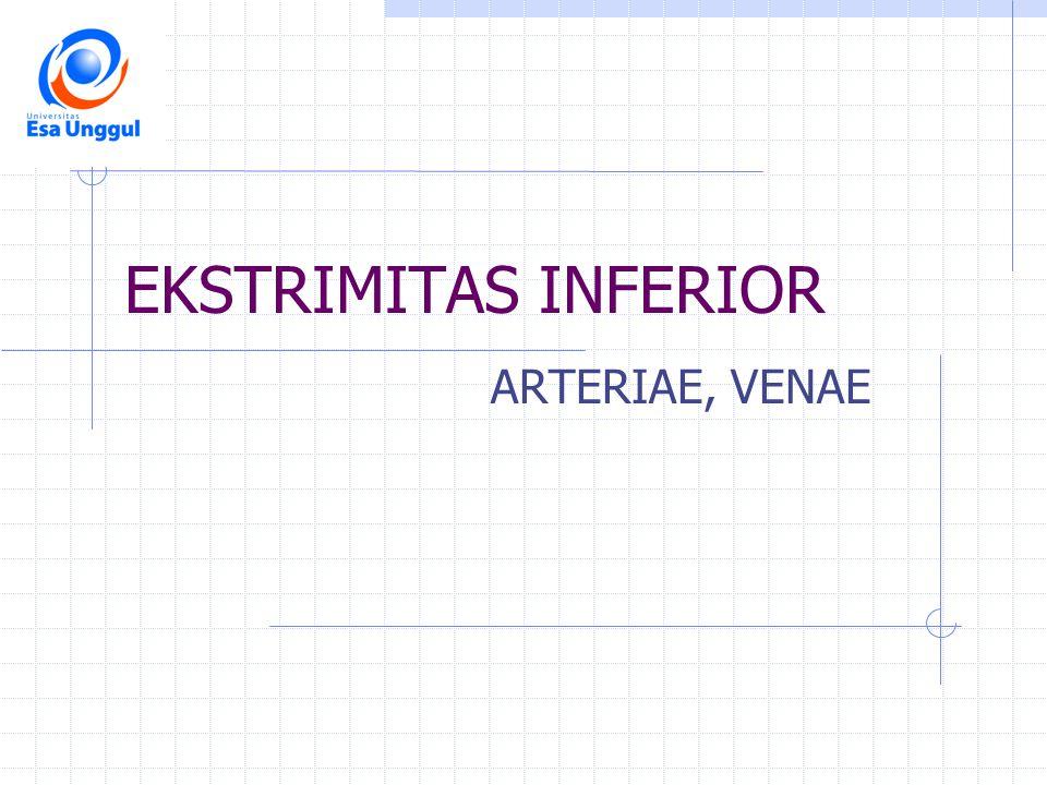 EKSTRIMITAS INFERIOR ARTERIAE, VENAE