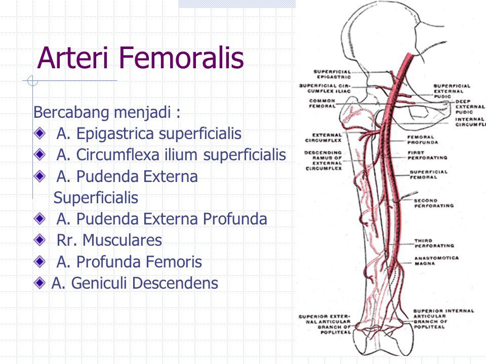 Arteri Femoralis Bercabang menjadi : A. Epigastrica superficialis