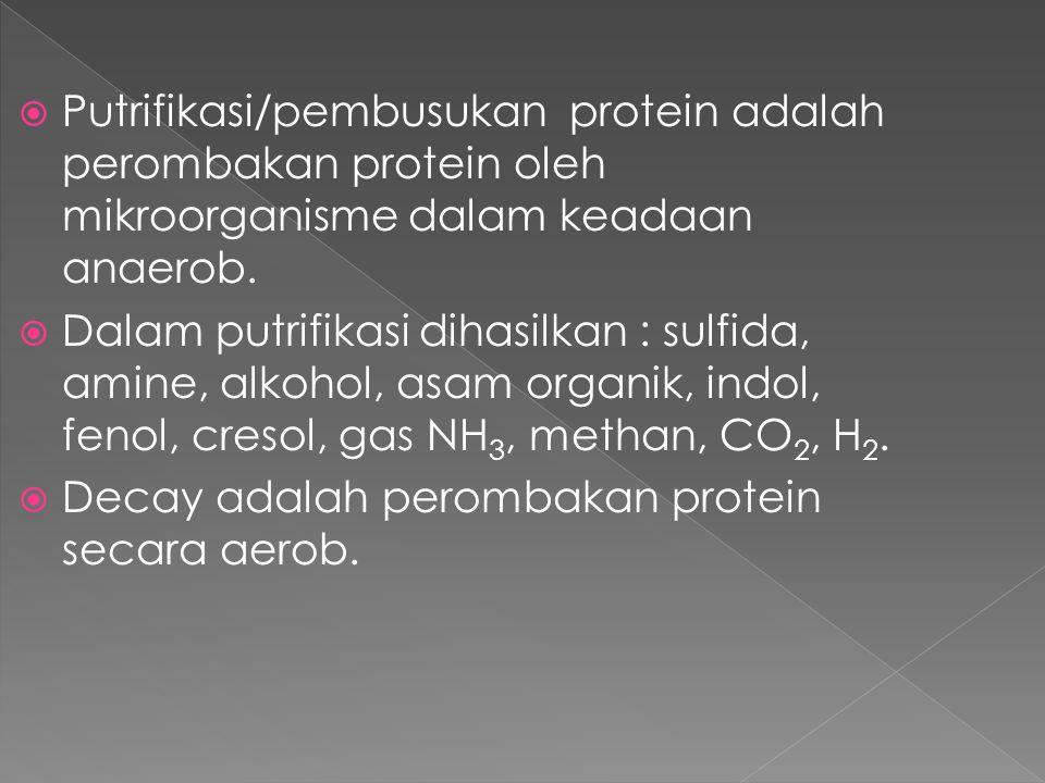 Putrifikasi/pembusukan protein adalah perombakan protein oleh mikroorganisme dalam keadaan anaerob.