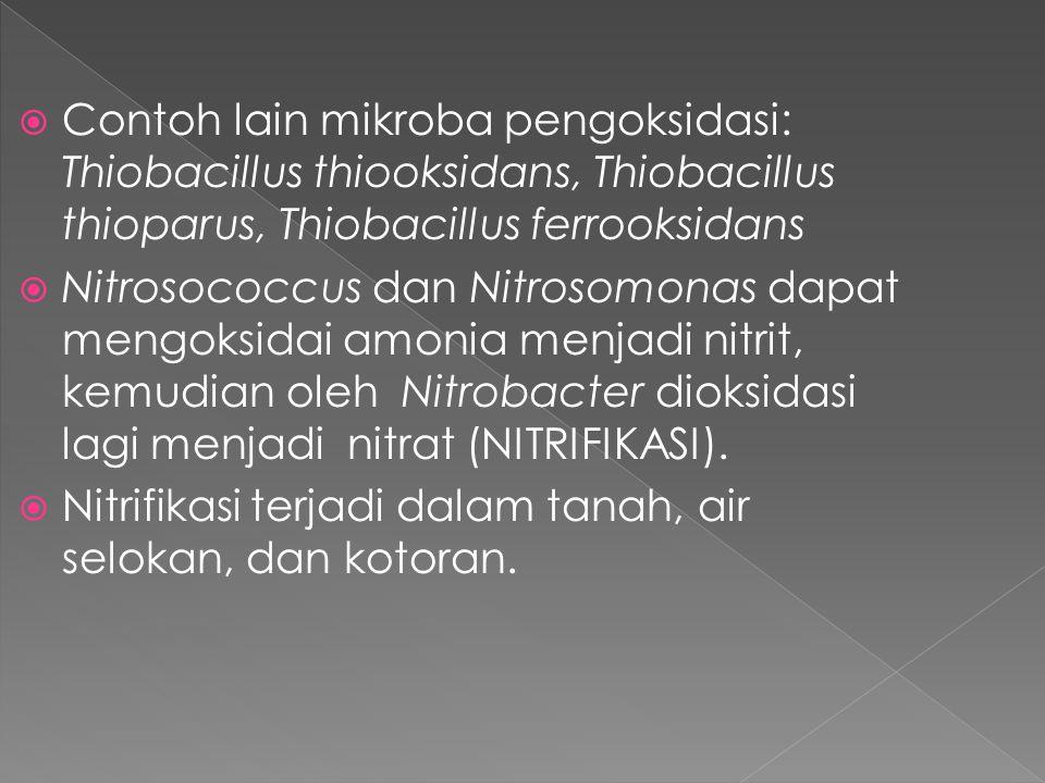 Contoh lain mikroba pengoksidasi: Thiobacillus thiooksidans, Thiobacillus thioparus, Thiobacillus ferrooksidans