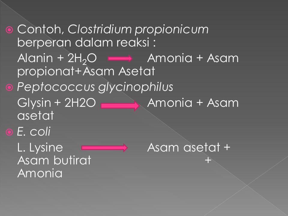 Contoh, Clostridium propionicum berperan dalam reaksi :