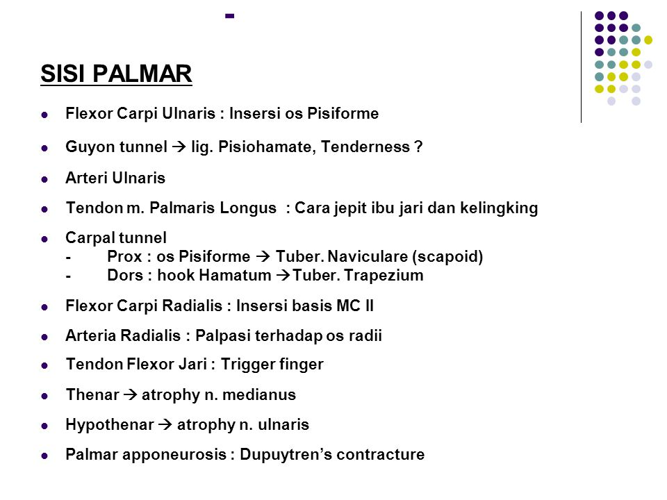 - SISI PALMAR Flexor Carpi Ulnaris : Insersi os Pisiforme