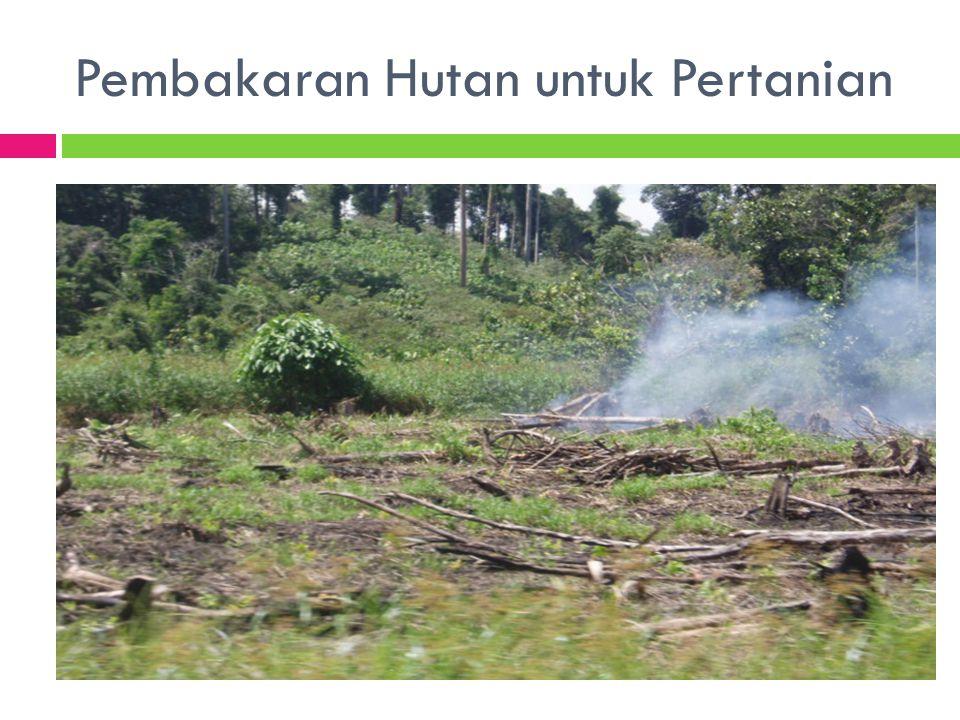 Pembakaran Hutan untuk Pertanian