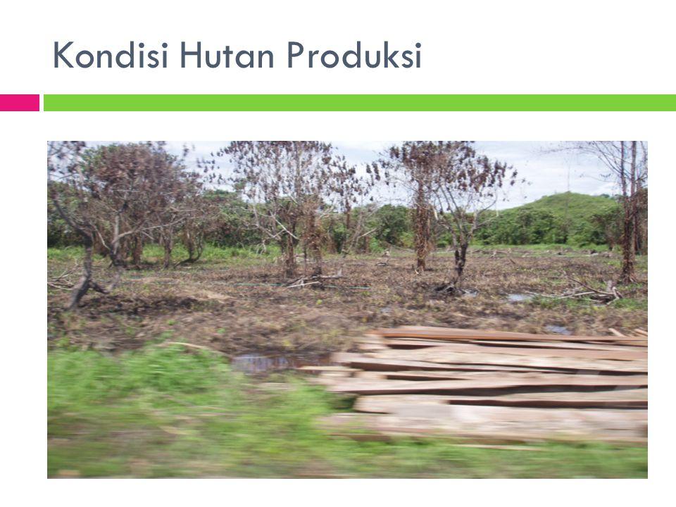 Kondisi Hutan Produksi