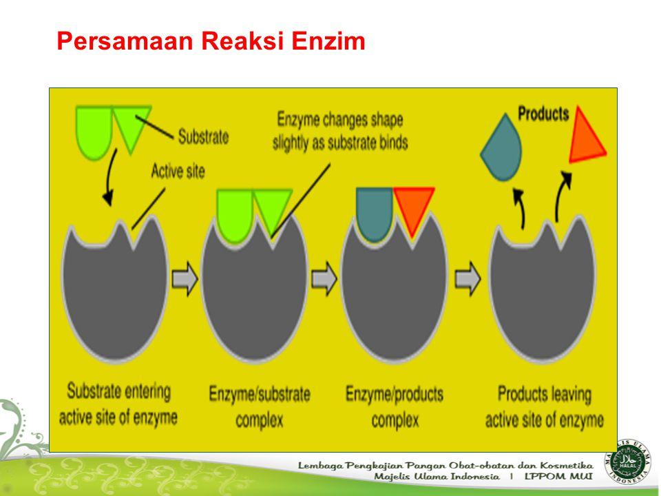 Persamaan Reaksi Enzim
