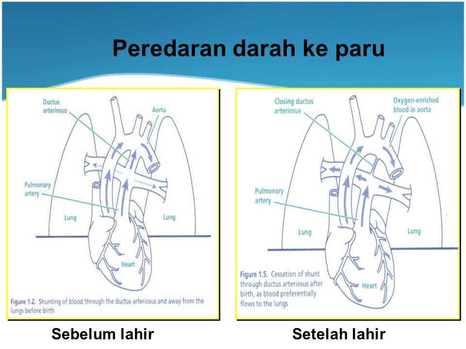 Peredaran darah ke paru