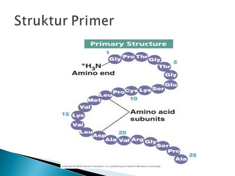 Struktur Primer
