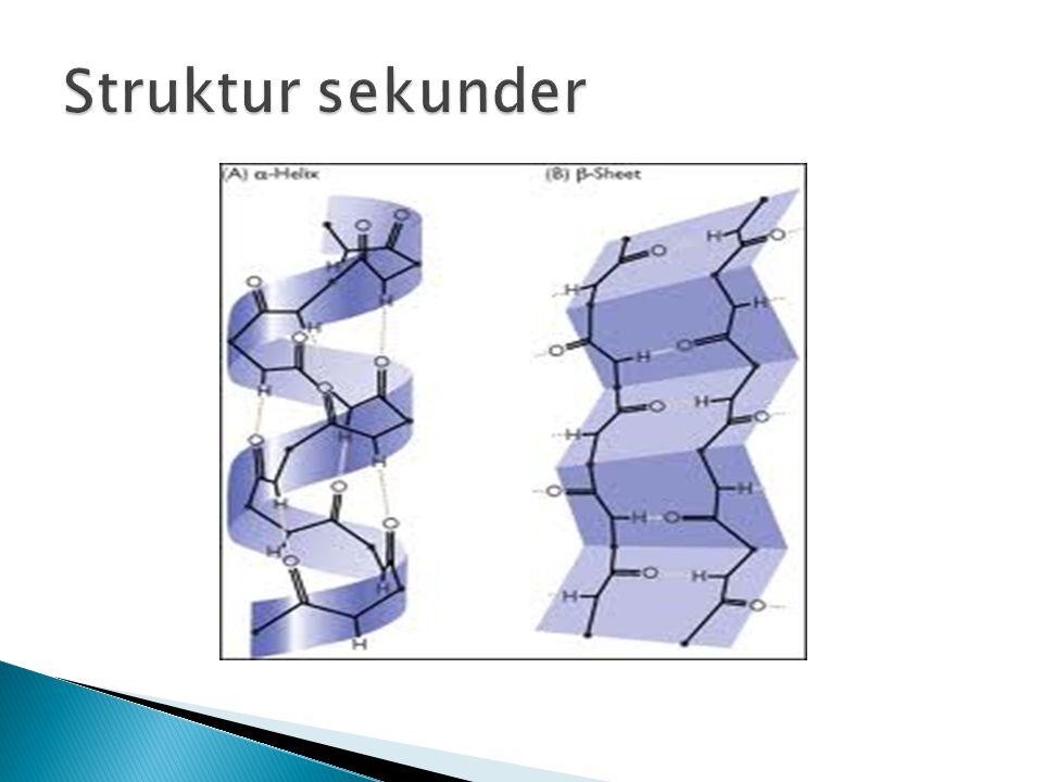 Struktur sekunder