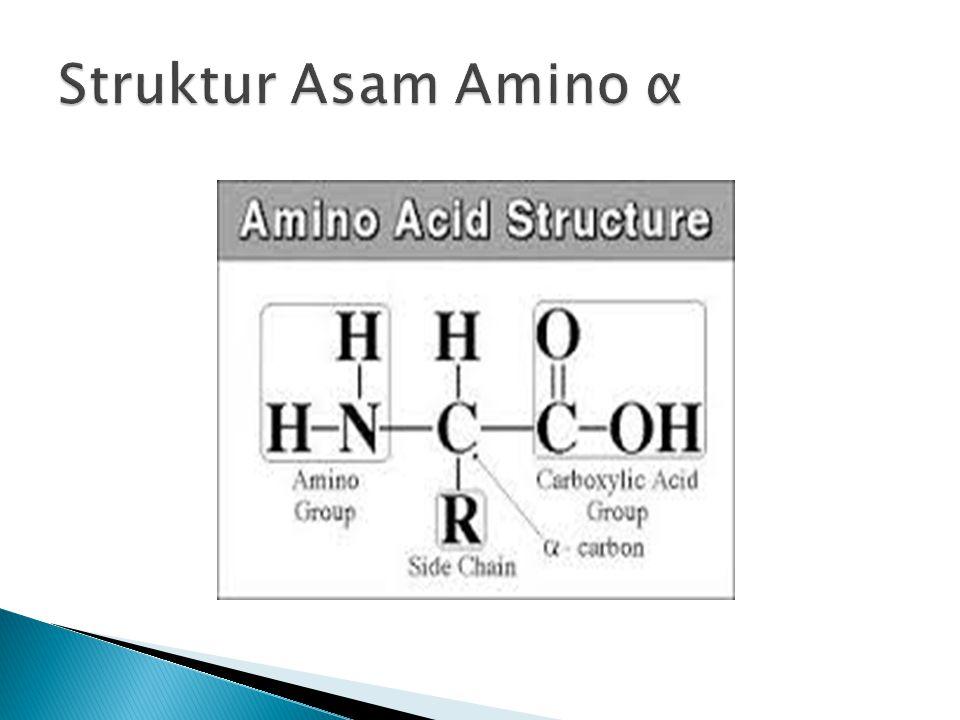 Struktur Asam Amino α