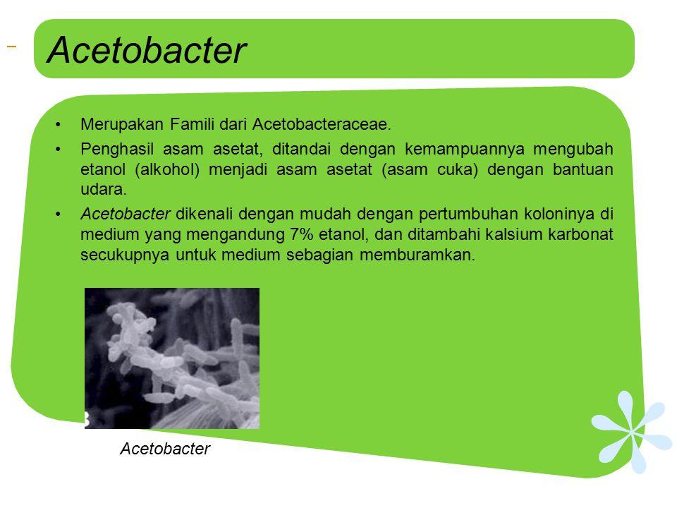 Acetobacter Acetobacter Acetobacter