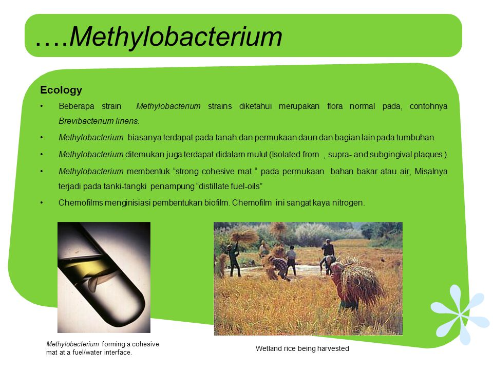 ….Methylobacterium Ecology
