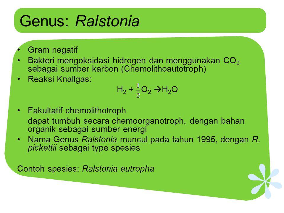 Genus: Ralstonia Gram negatif