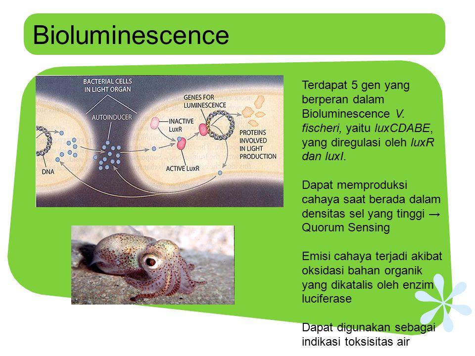Bioluminescence Terdapat 5 gen yang berperan dalam Bioluminescence V. fischeri, yaitu luxCDABE, yang diregulasi oleh luxR dan luxI.