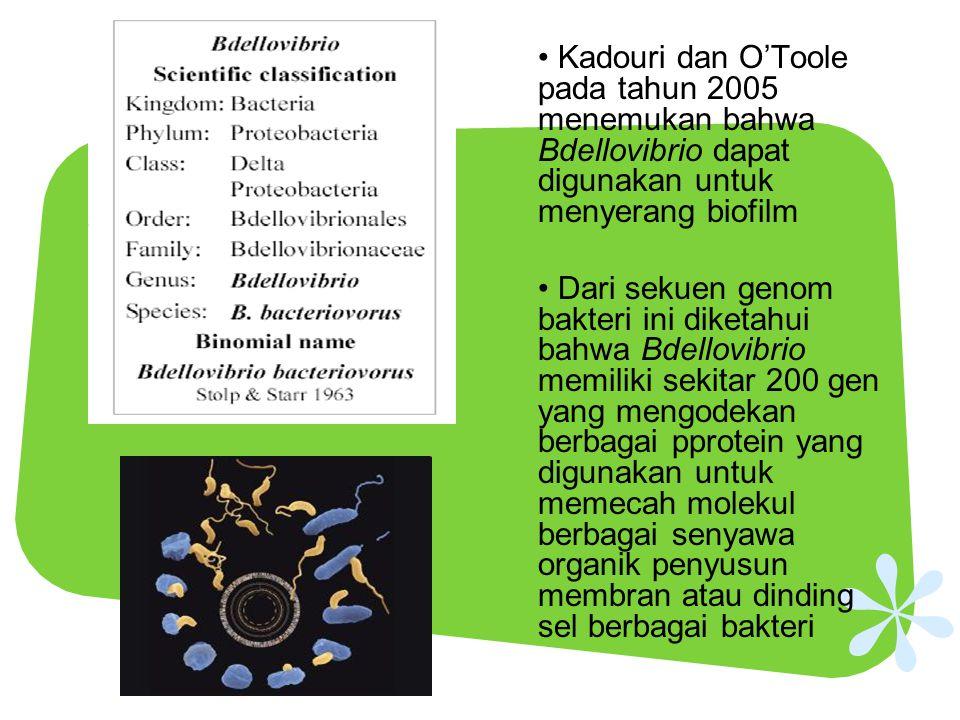 Kadouri dan O'Toole pada tahun 2005 menemukan bahwa Bdellovibrio dapat digunakan untuk menyerang biofilm