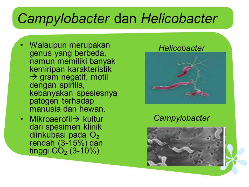 Campylobacter dan Helicobacter