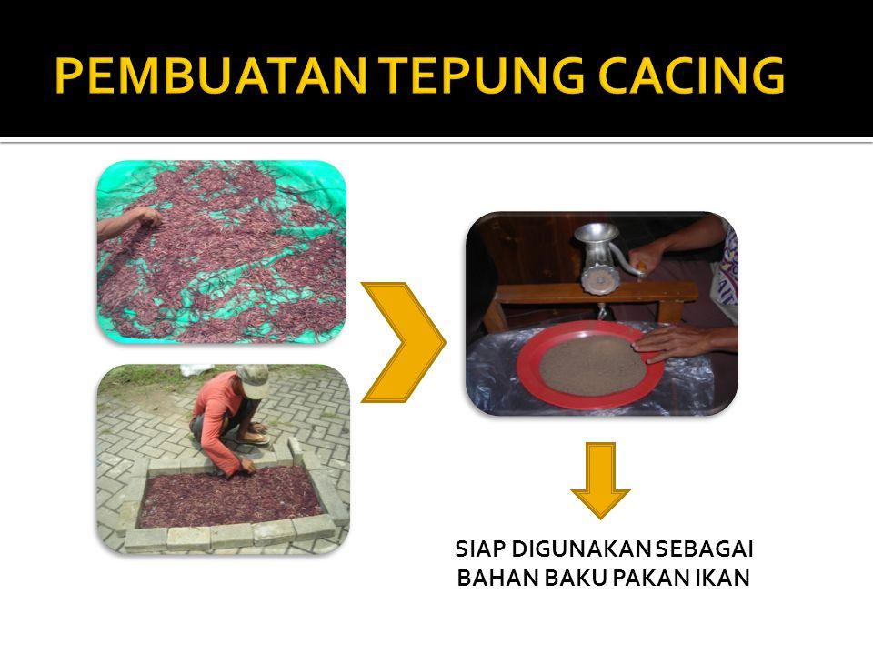 PEMBUATAN TEPUNG CACING