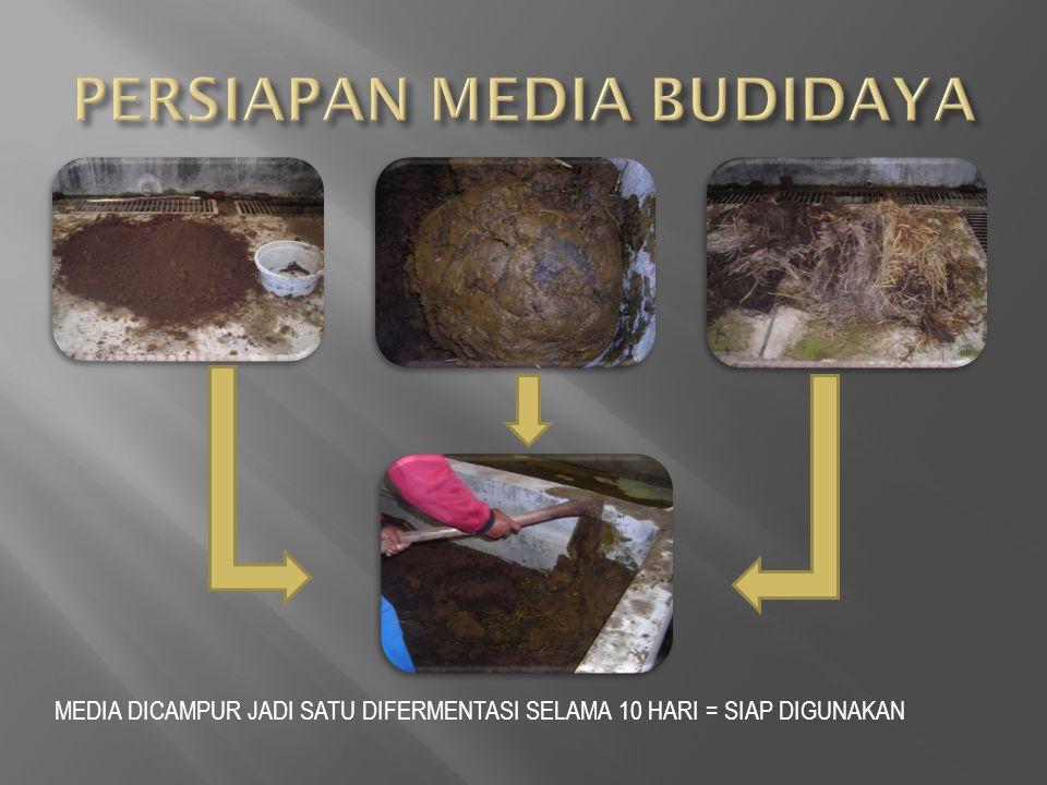 PERSIAPAN MEDIA BUDIDAYA