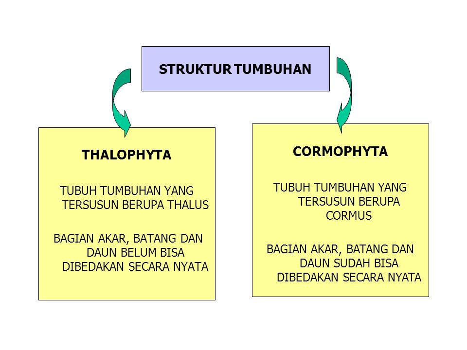 STRUKTUR TUMBUHAN CORMOPHYTA THALOPHYTA