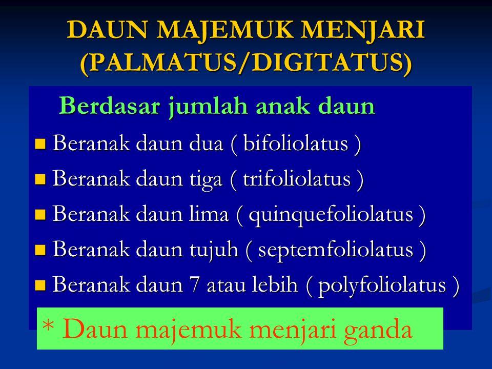 DAUN MAJEMUK MENJARI (PALMATUS/DIGITATUS)