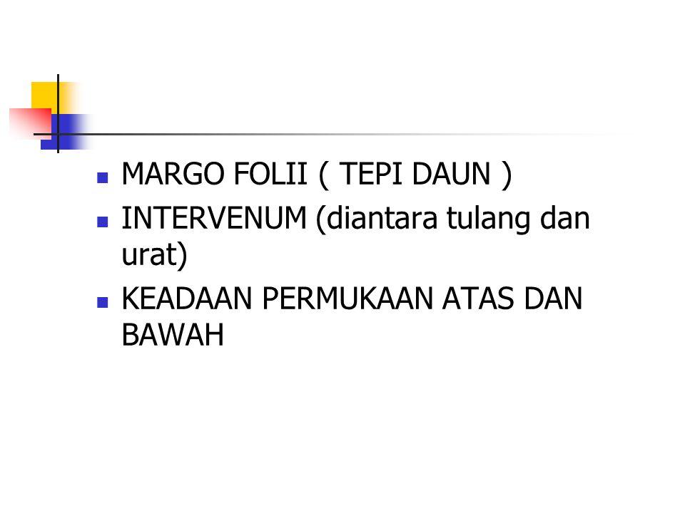 MARGO FOLII ( TEPI DAUN )