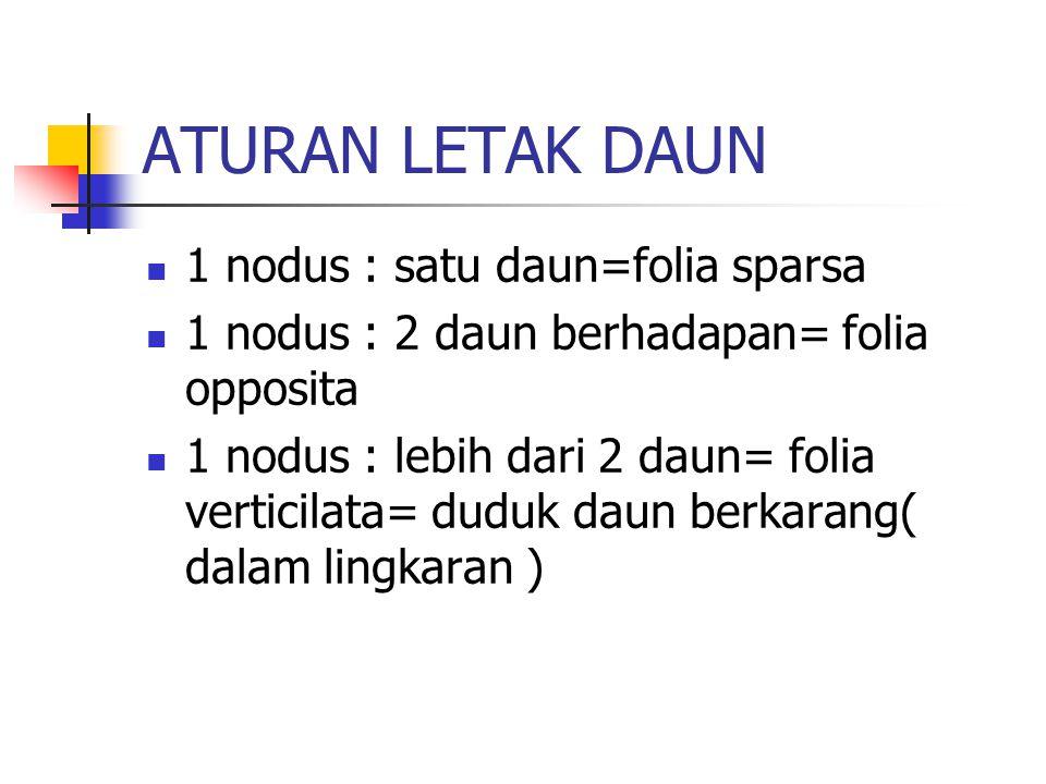 ATURAN LETAK DAUN 1 nodus : satu daun=folia sparsa