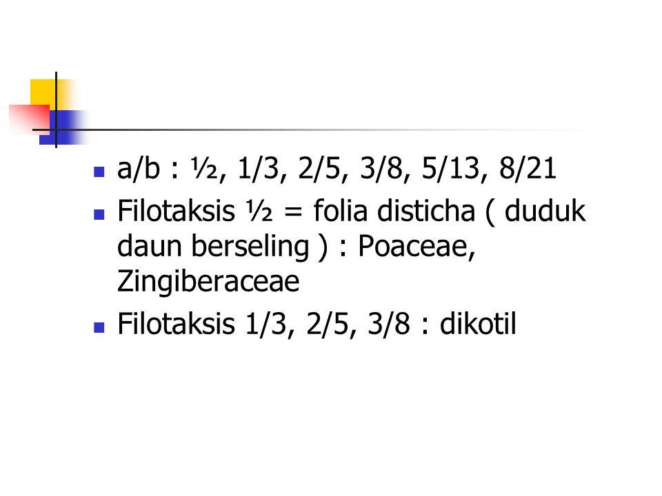 a/b : ½, 1/3, 2/5, 3/8, 5/13, 8/21 Filotaksis ½ = folia disticha ( duduk daun berseling ) : Poaceae, Zingiberaceae.